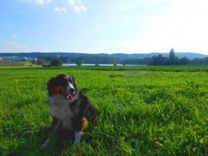 Seeholz Farm 2014 (1)