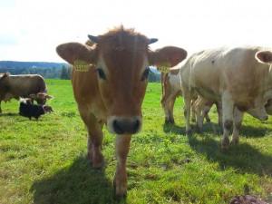Seeholz Farm 2014 (2)