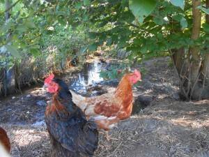 Seeholz Farm 2014 (7)